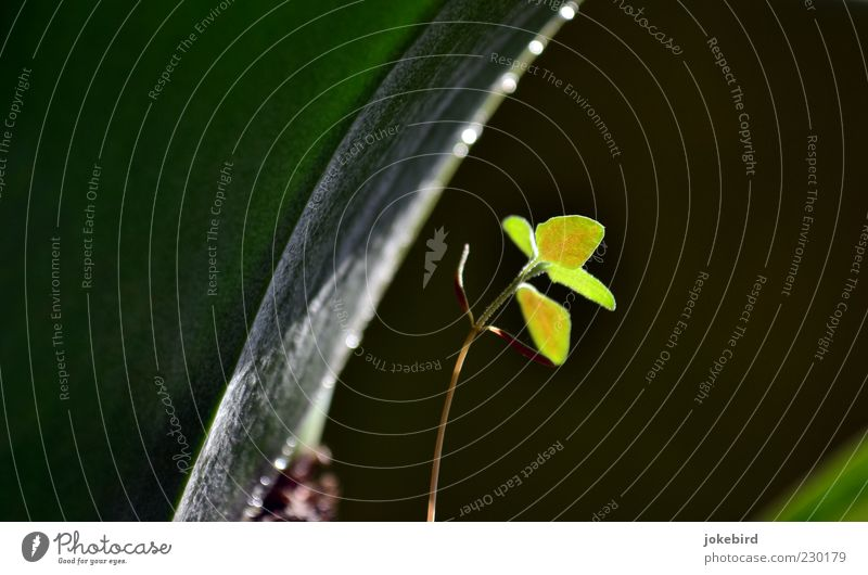 Under the canopy Plant Leaf Wild plant Plantlet Weed Underside of a leaf Stalk Illuminate Growth Fresh Green Hope Protection Delicate Glittering Bend Curved