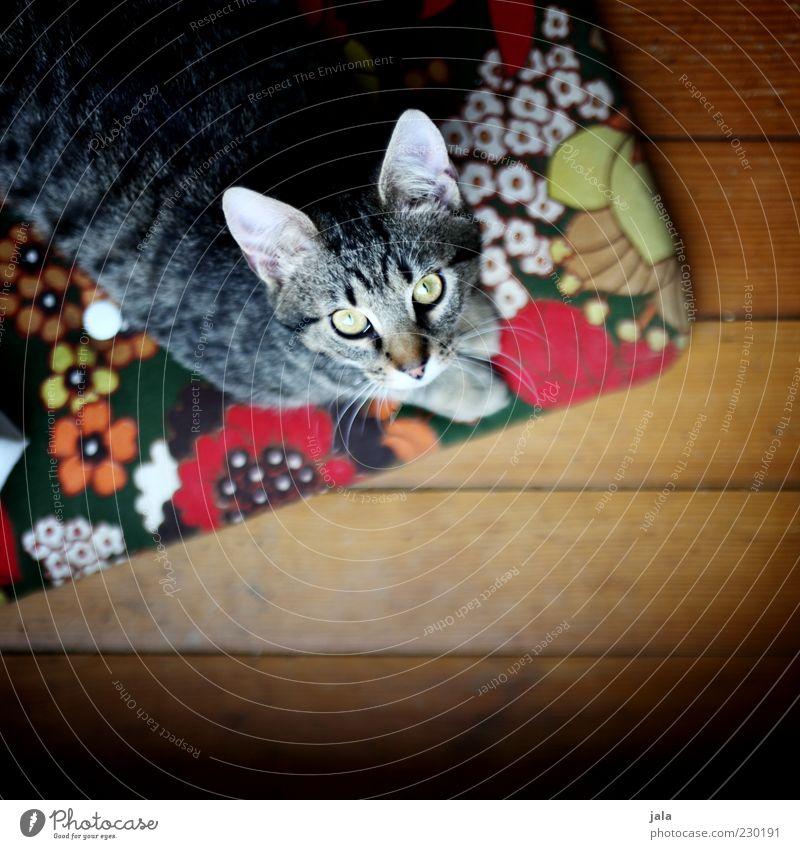 Cat Animal Wait Animal face Pelt Pet Parquet floor Cushion Crouch Multicoloured Beg Cat eyes Cat's head Cat's ears