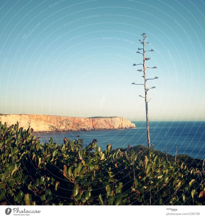 a(l)ga(r)ve. Landscape Water Sky Spring Beautiful weather Plant Agave Cactus Rock Coast Ocean Atlantic Ocean Vacation & Travel Sagres Algarve Wall of rock