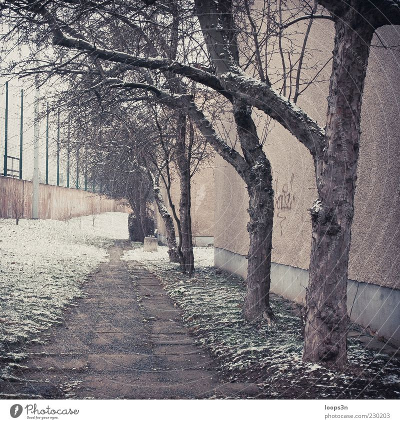 After Parties III Environment Winter Bad weather Fog Ice Frost Snow Tree Deserted House (Residential Structure) Wall (barrier) Wall (building) Authentic Cold