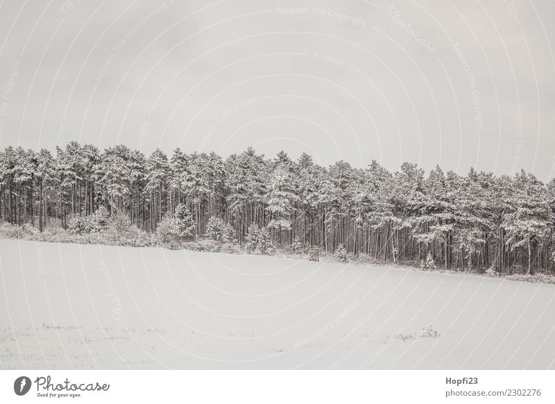 Landscape in winter Vacation & Travel Trip Adventure Far-off places Freedom Winter Snow Winter vacation Environment Nature Plant Ice Frost Tree Meadow Forest