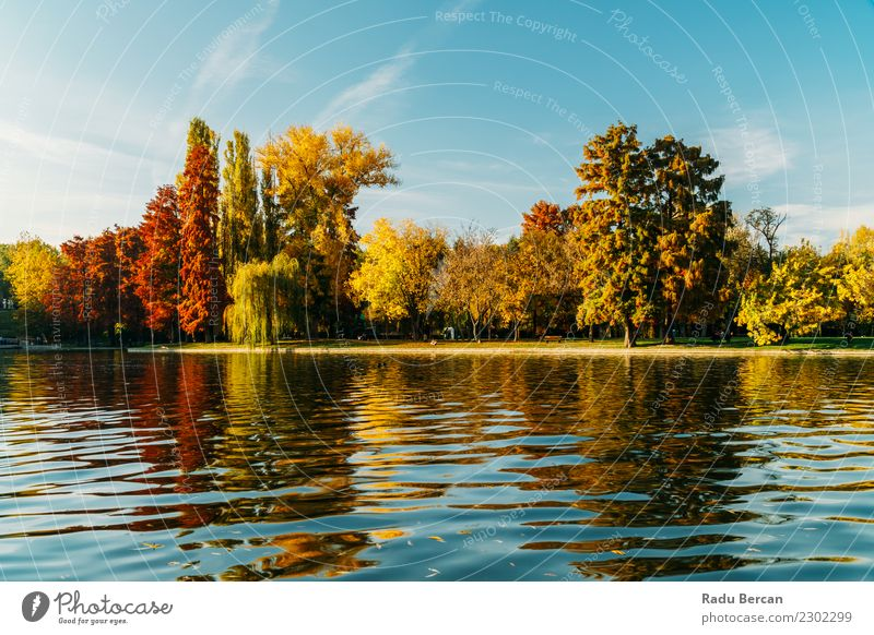 Autumn Season In Bucharest Park Landscape Environment Nature Water Sky Weather Beautiful weather Tree Grass Forest Pond Lake Natural Blue Multicoloured Yellow