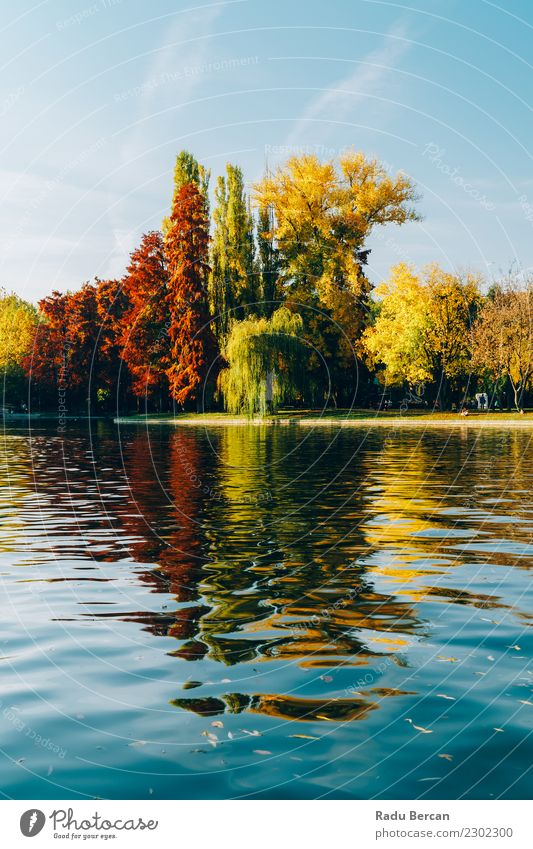 Autumn Season In Bucharest Park Landscape Environment Nature Plant Water Sky Weather Beautiful weather Tree Forest Pond Lake Natural Blue Multicoloured Yellow