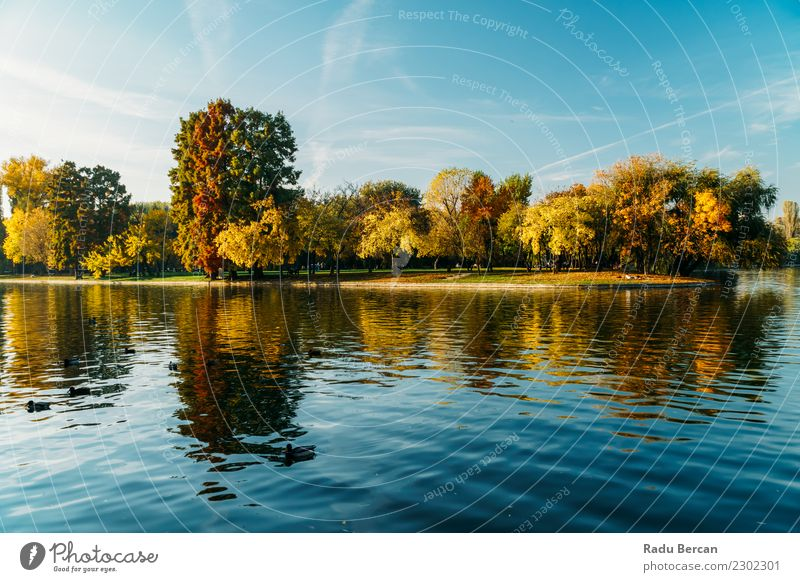 Autumn Season In Bucharest Park Landscape Environment Nature Water Sky Weather Tree Grass Forest Pond Lake Beautiful Natural Blue Multicoloured Yellow Green