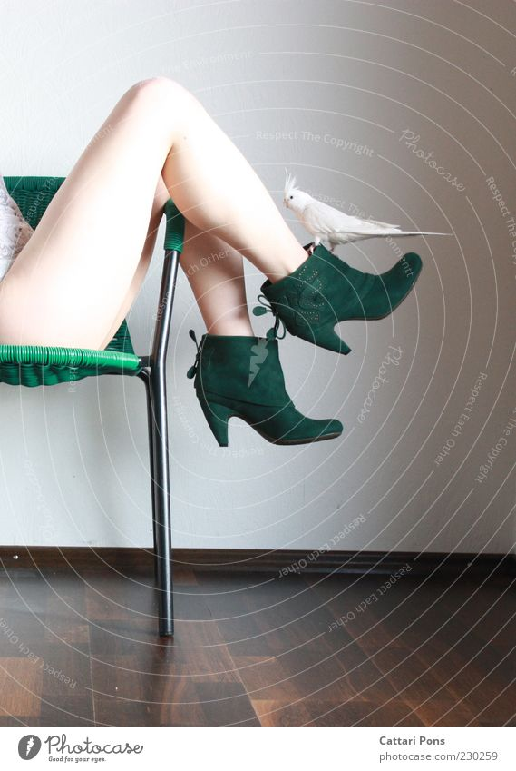 white & green Human being Feminine Young woman Youth (Young adults) Woman Adults Legs 1 Fashion Clothing Footwear High heels Animal Pet Bird cockatiel