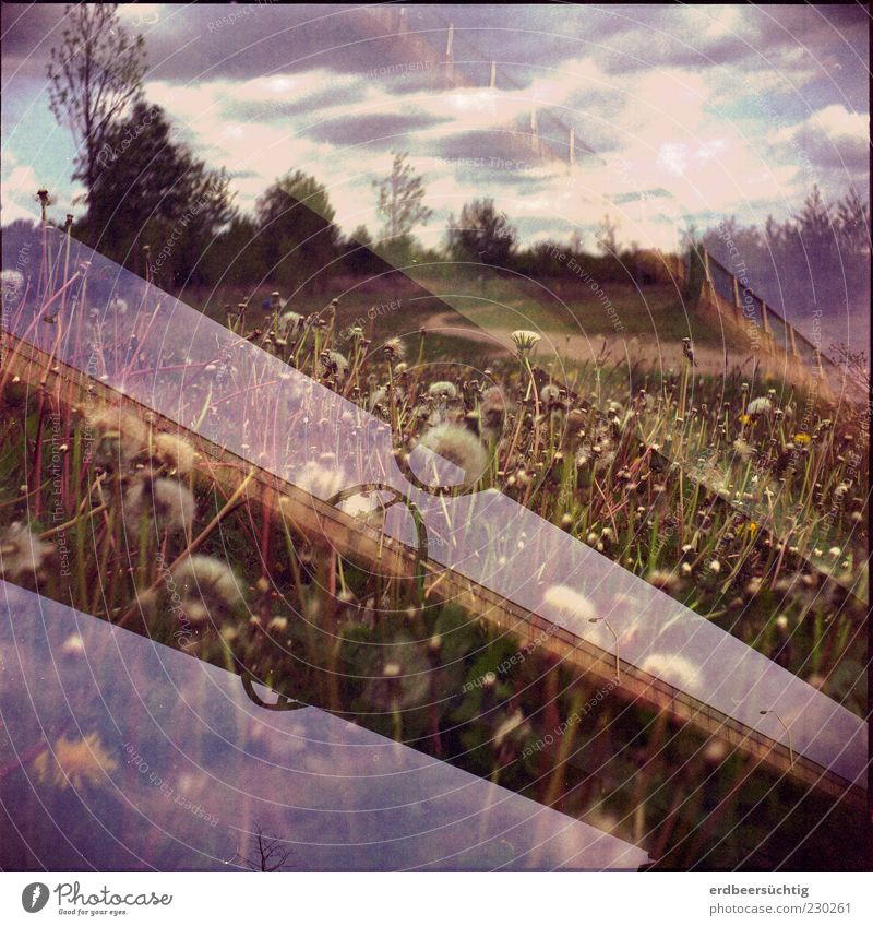 Tand, Tand - is the structure of human hand Trip Environment Nature Landscape Sky Clouds Spring Climate Plant Flower Grass Wild plant Dandelion Meadow Bridge