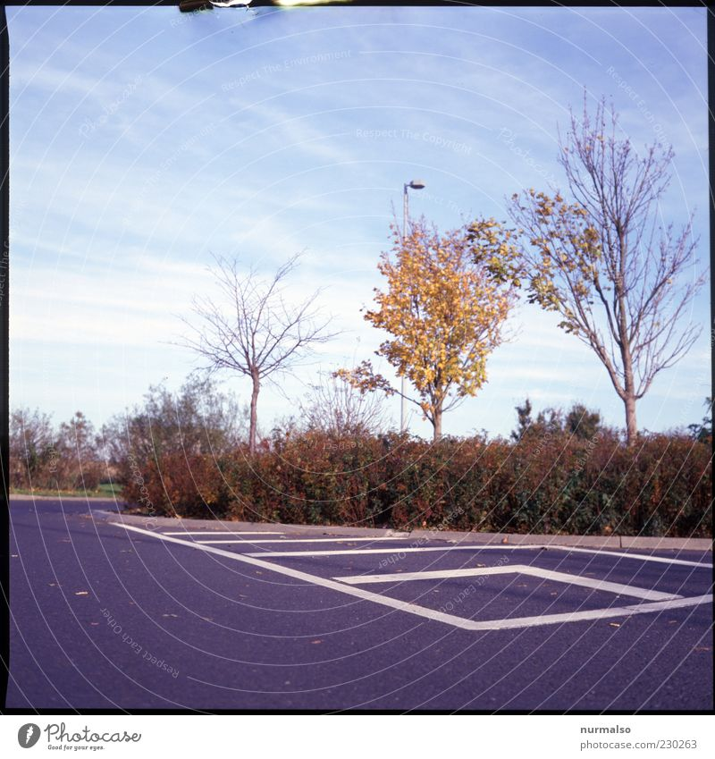 autumn rest Environment Nature Sky Autumn Beautiful weather Tree Transport Traffic infrastructure Curbside Resting place Signs and labeling Parking lot
