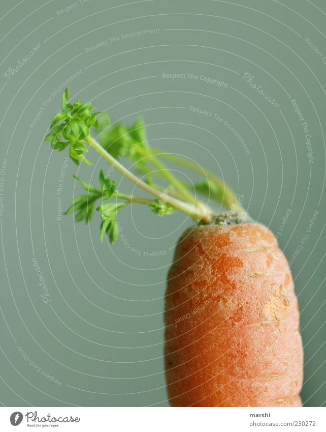 Green Healthy Orange Food Nutrition Vegetable Stalk Organic produce Carrot Foliage plant Vegetarian diet Plant