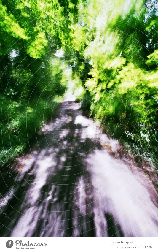 moving forward Summer Beautiful weather Park Forest Lanes & trails Movement Speed Green Time Analog Colour photo Exterior shot Deserted Copy Space bottom Day
