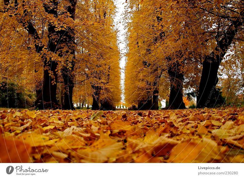 Nature Tree Forest Autumn Environment Lanes & trails Park Beautiful weather Autumn leaves Autumnal Autumnal colours Automn wood