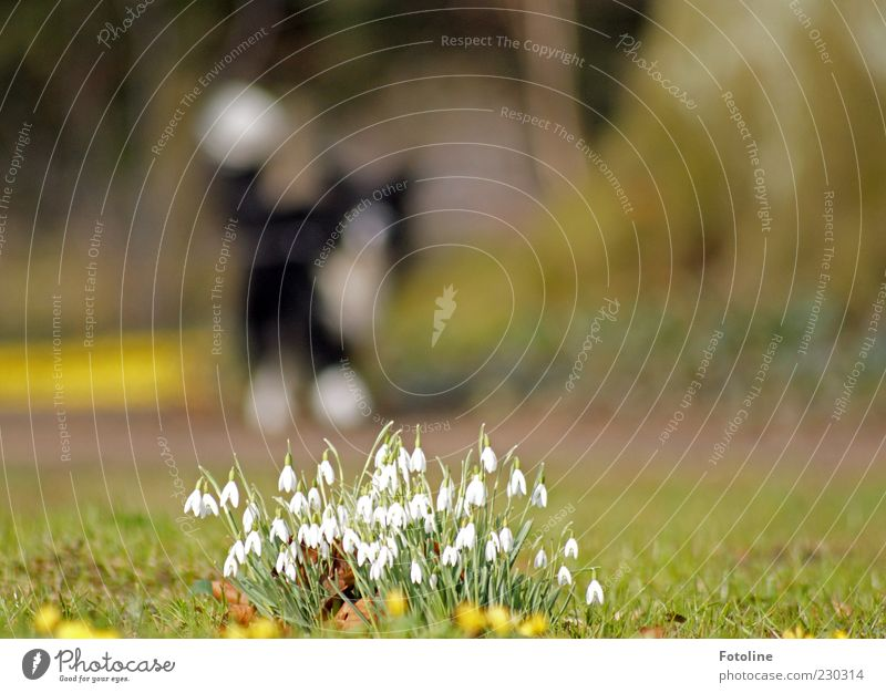 Nature Plant Flower Leaf Animal Dog Environment Grass Blossom Spring Park Bright Earth Walking Natural Elements
