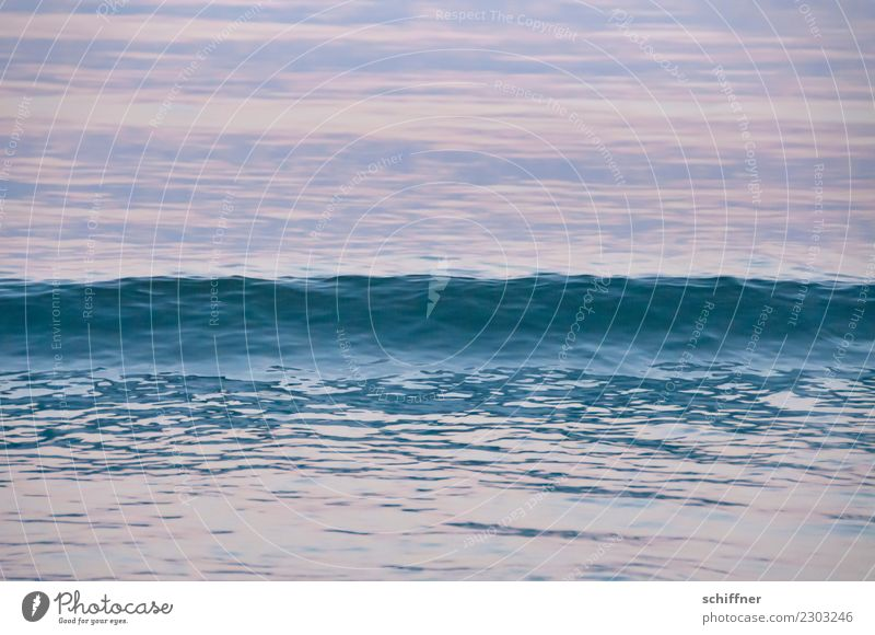 Texture | of the wave Nature Water Waves Ocean Blue Pink Surface of water Sea water Atlantic Ocean Swell Undulation Undulating Crest of the wave Evening Dusk