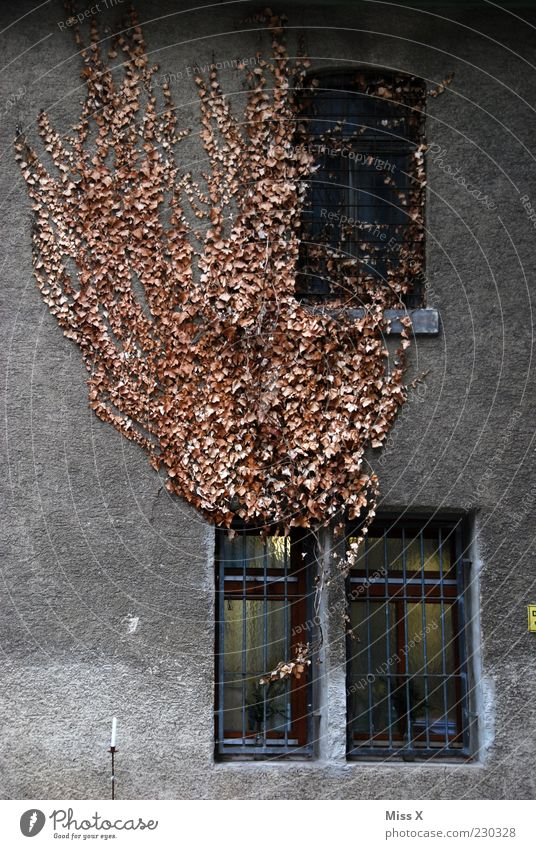 Old Leaf House (Residential Structure) Autumn Window Wall (building) Wall (barrier) Dirty Facade Car Window Growth Change Gloomy Grating Shriveled Weathered