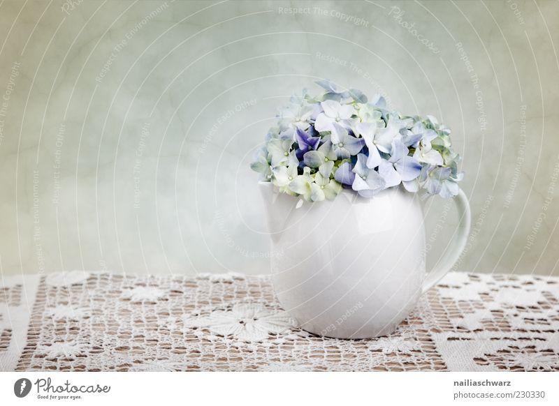 Blue White Plant Flower Wood Stone Spring Elegant Esthetic Decoration Simple Still Life Vase Pastel tone Hydrangea Teapot