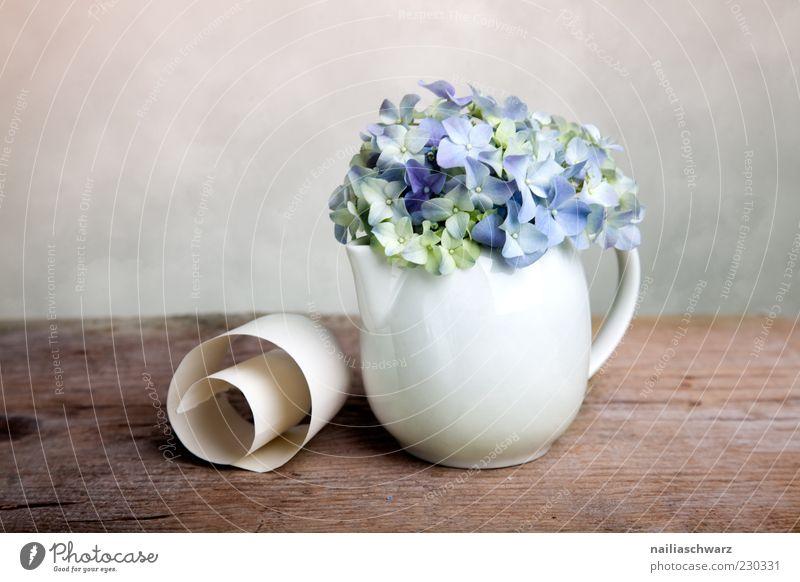 Still life with hydrangeas Decoration Plant Flower Hydrangea Hydrangea blossom Still Life Vase Teapot Porcelain Stone Wood Esthetic Simple Elegant Blue Brown