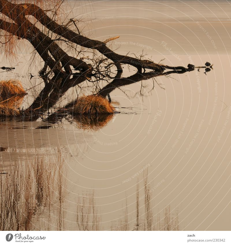 Nature Water Tree Calm Loneliness Animal Relaxation Autumn Dark Grass Lake Bird Lakeside Pond