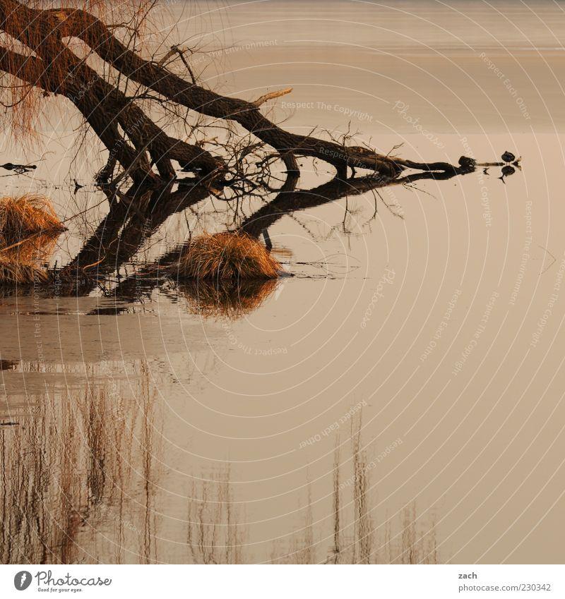 Nature Water Tree Calm Loneliness Animal Relaxation Autumn Dark Grass Lake Bird Lakeside Pond