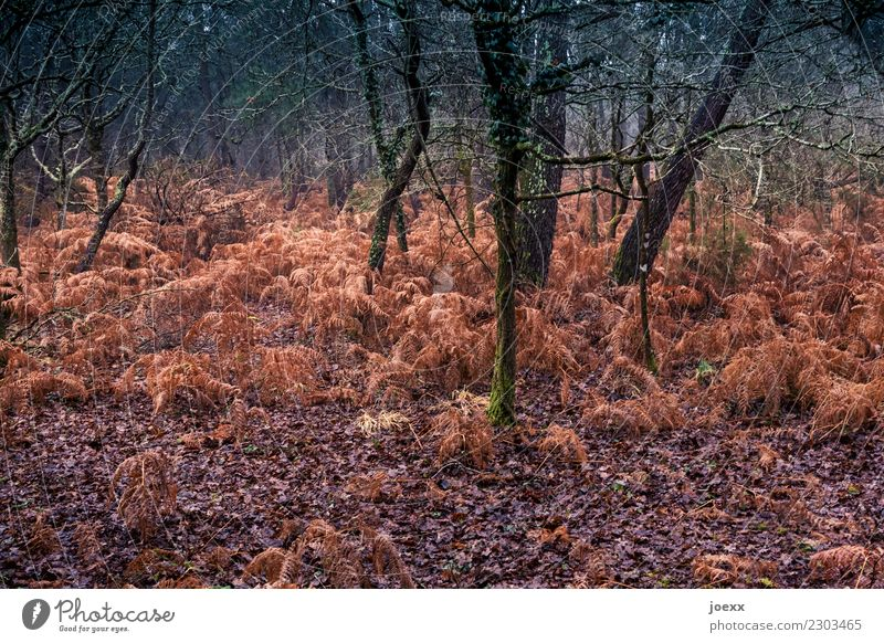 Red wild Nature Autumn Weather Tree Forest Brown Green Fern Colour photo Exterior shot Deserted Deep depth of field