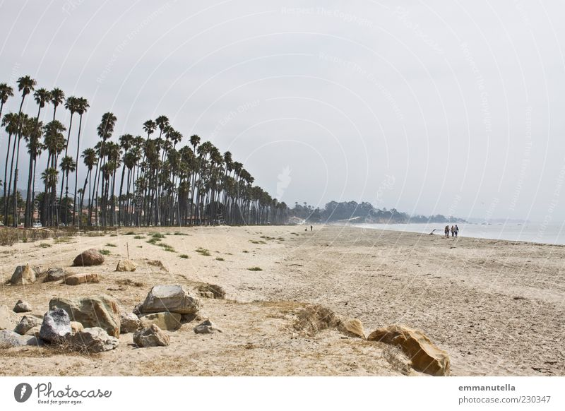 Santa Barbara Beach Summer vacation Ocean Landscape Sand Water Sky Weather Palm tree St. Barbara USA Stone Going Brown Longing Wanderlust Relaxation