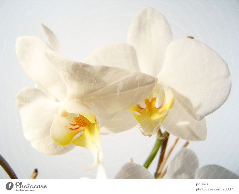 orchid Orchid Flower Near Beautiful White