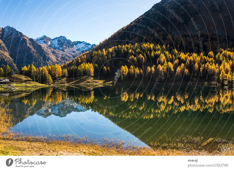 Mirrored autumn gold Nature Vacation & Travel Landscape Loneliness Calm Forest Mountain Autumn Tourism Lake Trip Hiking Illuminate Gold Adventure