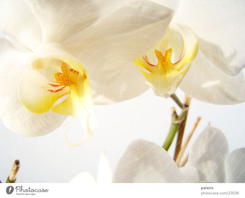 Beautiful White Flower Near Orchid