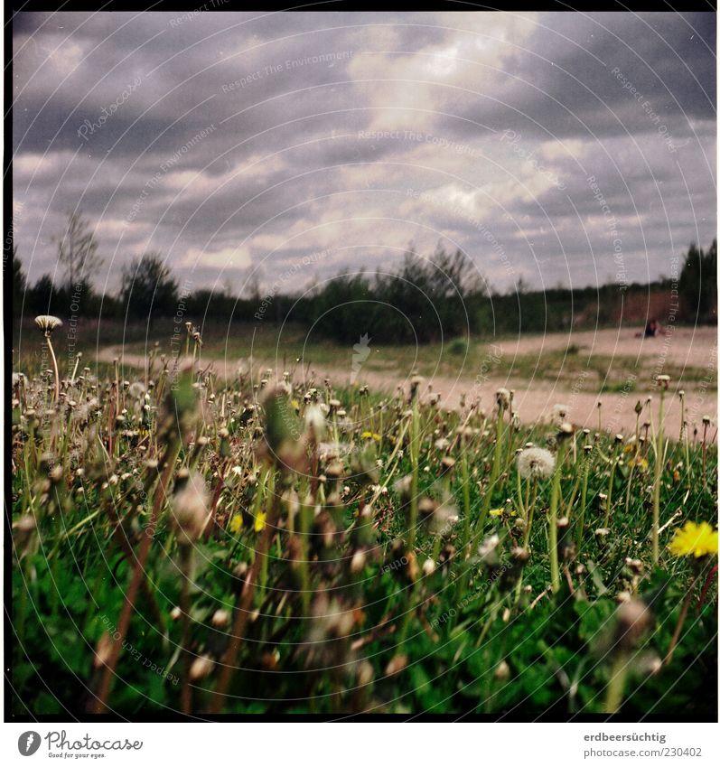 Renaturation complete Environment Nature Landscape Plant Earth Sand Clouds Storm clouds Spring Tree Flower Grass Bushes Foliage plant Dandelion Meadow Deserted