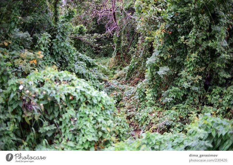 Forest Nature Green Plant Summer Landscape Bushes