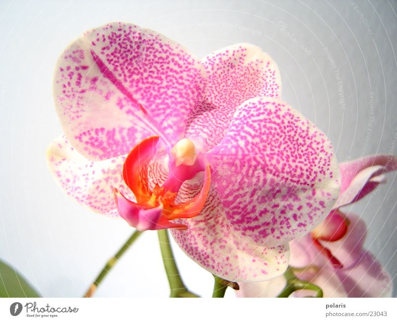 orchid Orchid Pink Violet Flower Near Beautiful