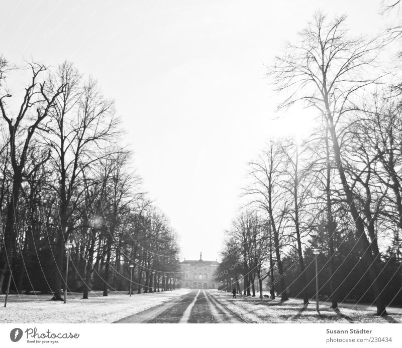garden Beautiful weather Tree House (Residential Structure) Tourist Attraction Historic Avenue Park Dresden Snow Lens flare Winter Cold Black & white photo