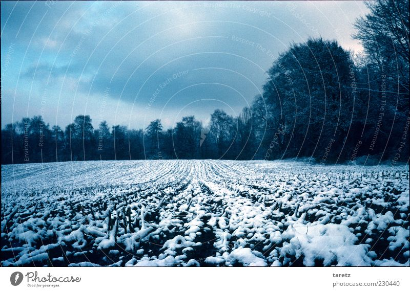 Winter Clouds Calm Cold Snow Landscape Field Tracks Agriculture Bad weather Direct Holiday season Peaceful Weather Edge of the forest To hibernate