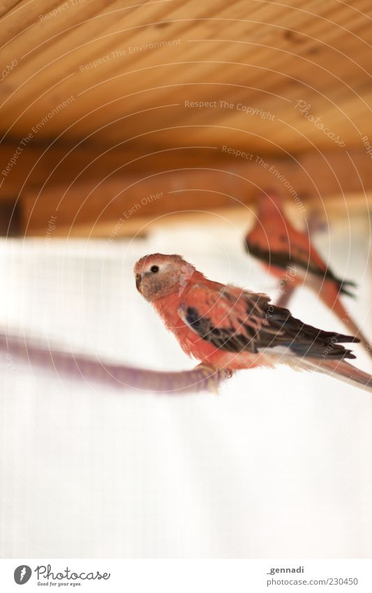outlaw Animal Pet Wing Bird 2 Rope Wild Pink Animalistic Colour photo Deserted Copy Space top Copy Space bottom Day Light Light (Natural Phenomenon) Sunlight