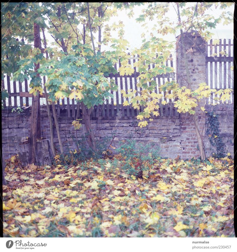Nature Leaf Autumn Meadow Environment Wall (building) Wall (barrier) Moody Wet Natural Wild Fence Autumn leaves Autumnal Wooden fence