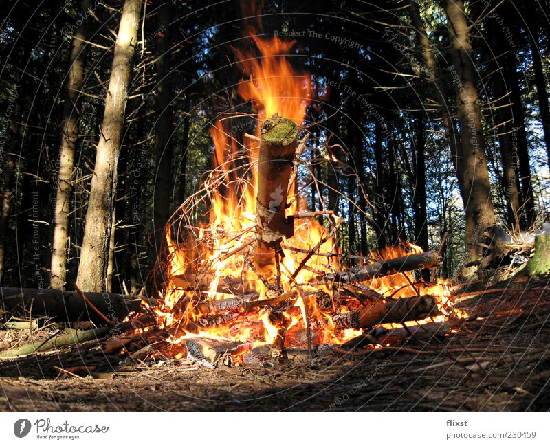 Tree Summer Forest Wood Fire Burn Fireplace