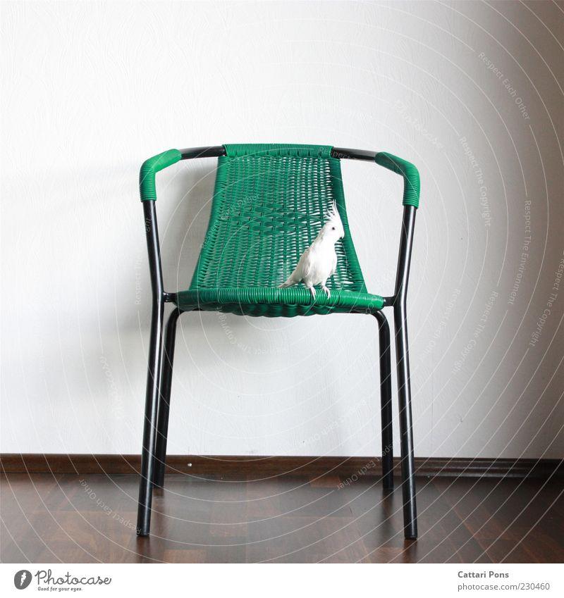 Green White Animal Small Bird Sit Chair Pet Parrots Furniture Light