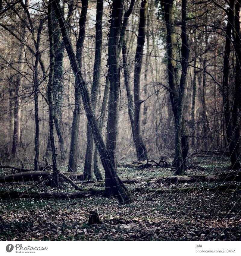 Nature Tree Plant Leaf Forest Landscape Tree trunk Autumnal Automn wood Mirkwood