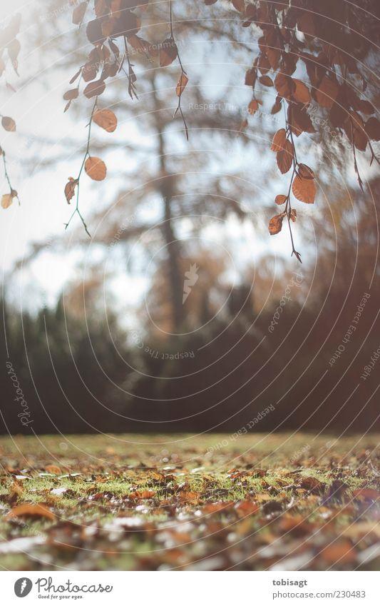 Nature Tree Sun Leaf Calm Yellow Autumn Meadow Landscape Park Bright Brown Contentment Natural Autumn leaves