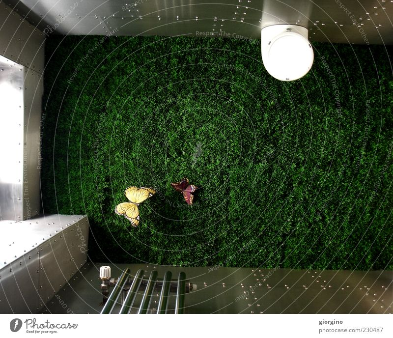 grass is everywhere Lifestyle Style Interior design Decoration Relaxation Innovative Inspiration Break Colour photo Interior shot Experimental Day Light Shadow