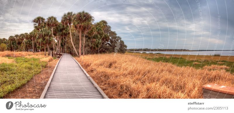 Boardwalk along the wetland at the Myakka River State Park Trip Nature Landscape Plant Tree Grass Lakeside River bank Pond Lanes & trails Blue Brown Yellow Gold