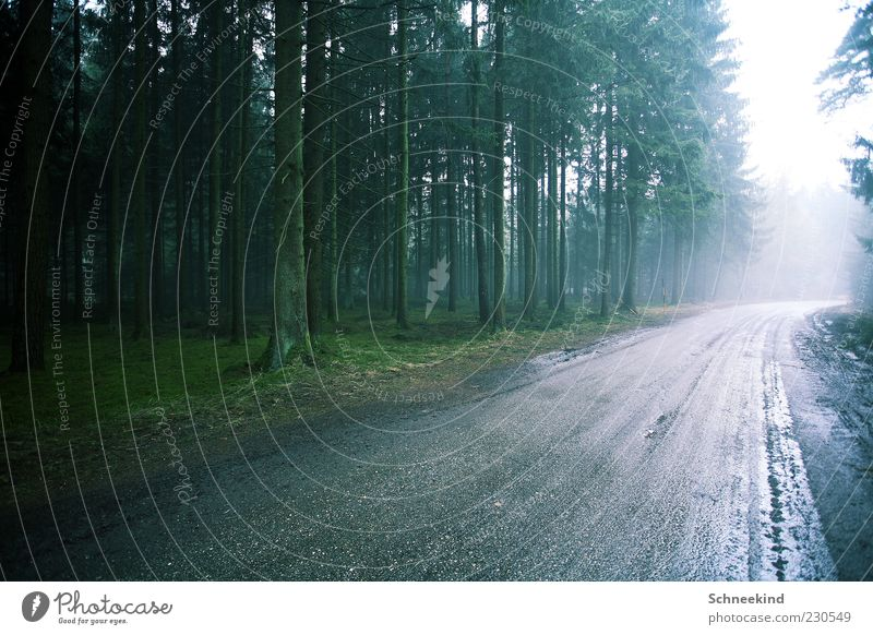 Nature Green Tree Plant Forest Street Environment Landscape Lanes & trails Air Bright Rain Wet Many Tree trunk Treetop