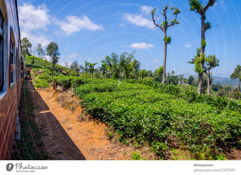 By train over tea plantation, Sri Lanka Tea Beautiful Vacation & Travel Tourism Summer Mountain Nature Landscape Forest Hill Transport Railroad Green ella Asia