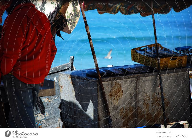 Human being Ocean Coast Waves Fresh Fish Simple Beautiful weather Sunshade Seagull Markets Sell Crate Fishery Identity Weather protection