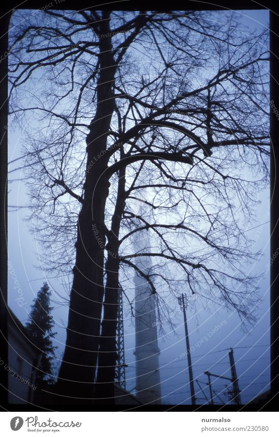 Nature Tree Winter Cold Dark Environment Style Sadness Dream Fog Authentic Change Gloomy Branch Factory Creepy