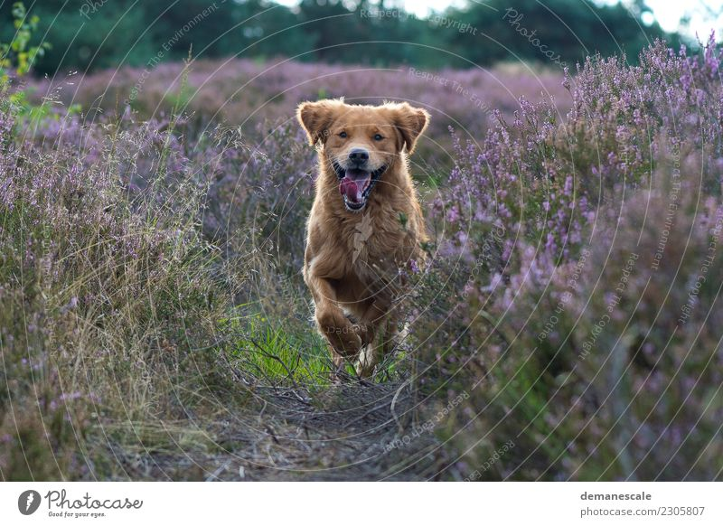 Unrestrained freedom. Happy Summer To go for a walk Nature Landscape Plant Beautiful weather Bushes Blossom Wild plant Heathland Forest Park Animal Pet Dog Pelt