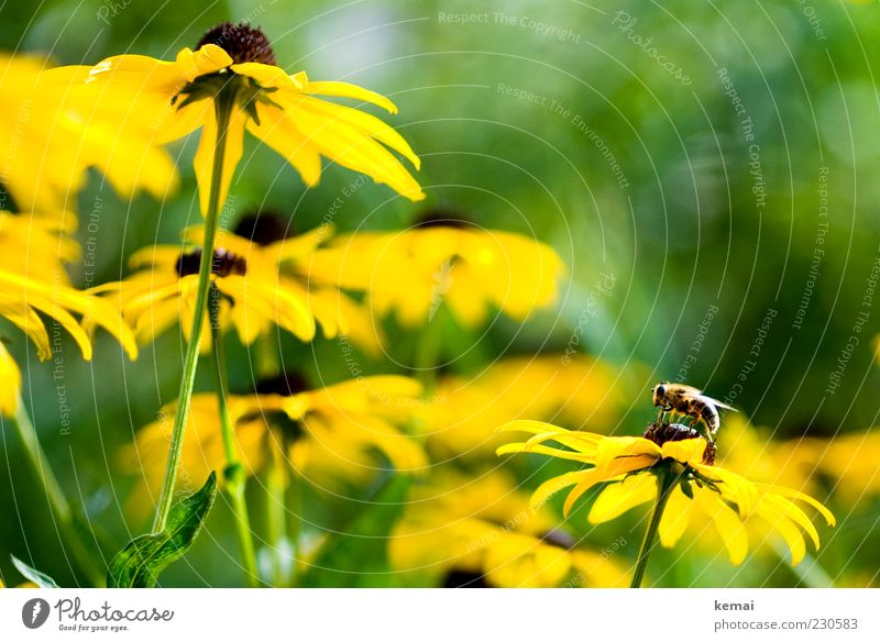 Nature Green Plant Sun Flower Animal Yellow Environment Blossom Spring Sit Wild animal Wing Insect Bee Blossoming