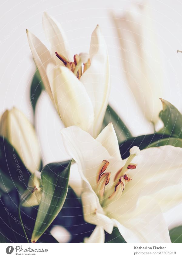 Lily was here. II Nature Plant Beautiful Green White Flower Red Art Garden Orange Esthetic Blossoming Bouquet Painting and drawing (object) Turquoise