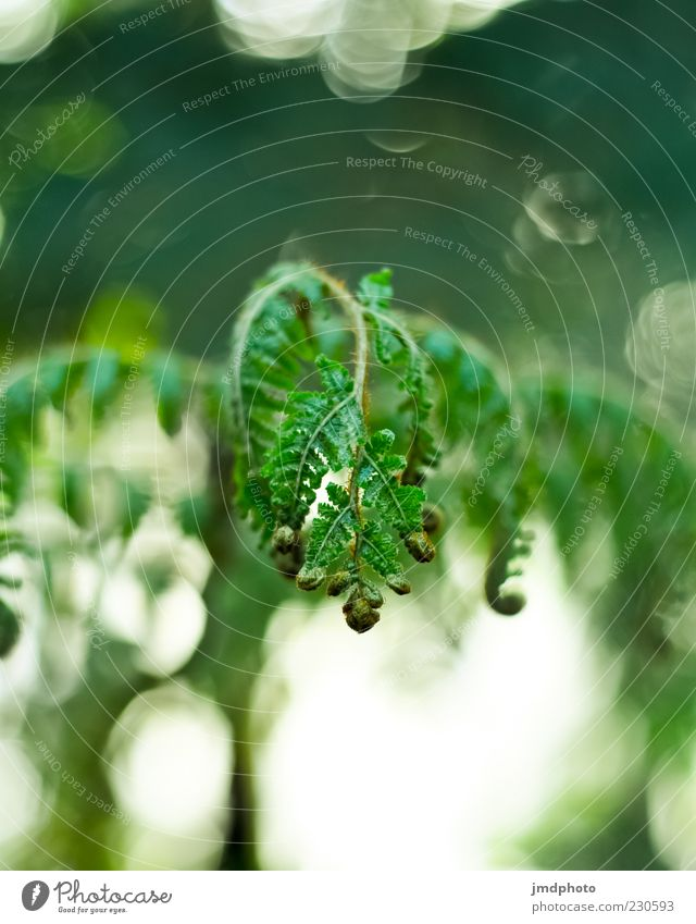 Nature White Green Beautiful Plant Leaf Environment Movement Spring Bright Power Wild Natural Esthetic Beautiful weather Near