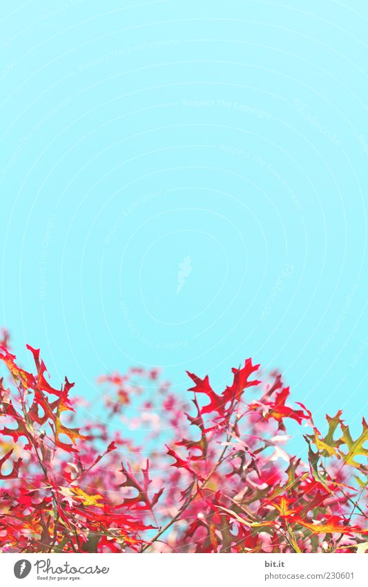 Sky Nature Blue Green Tree Red Plant Summer Leaf Environment Yellow Autumn Air Gold Climate Beautiful weather