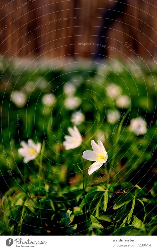 Nature Green White Beautiful Plant Flower Meadow Spring Brown Pink Growth Idyll Delicate Beautiful weather Stalk To enjoy
