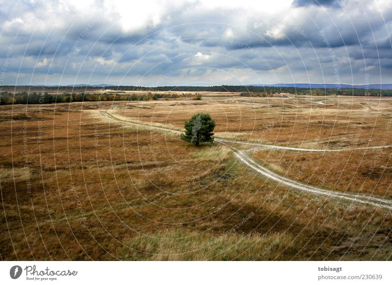 fork Nature Landscape Sky Clouds Autumn Weather Tree Grass Bushes Meadow Far-off places Dry Blue Brown Green Loneliness Colour photo Exterior shot Deserted Day